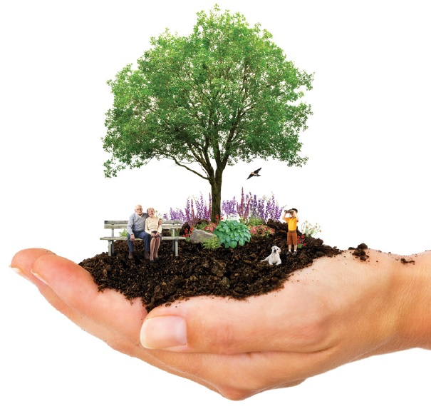 hand with tree and dirt